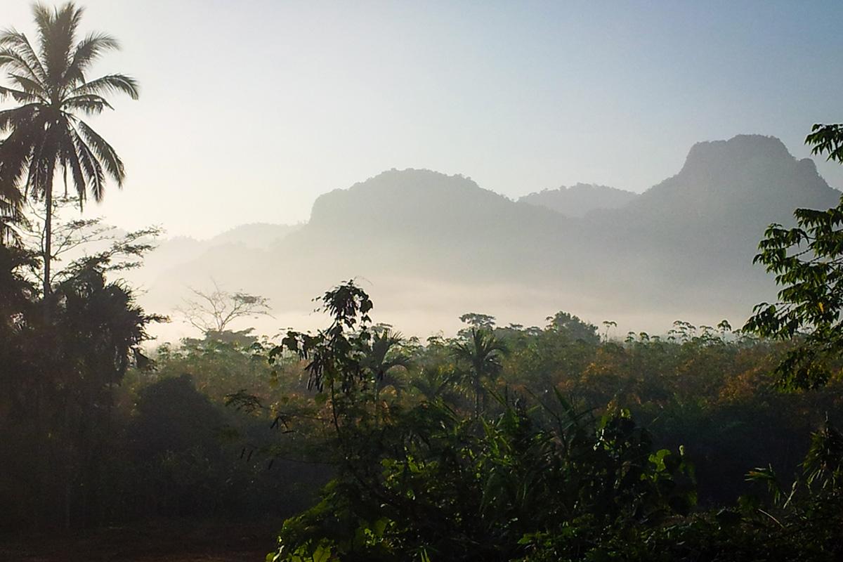 Jungle at Khao Sok